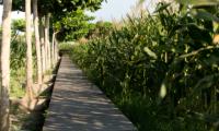 Sanur Residence Pathway | Sanur, Bali