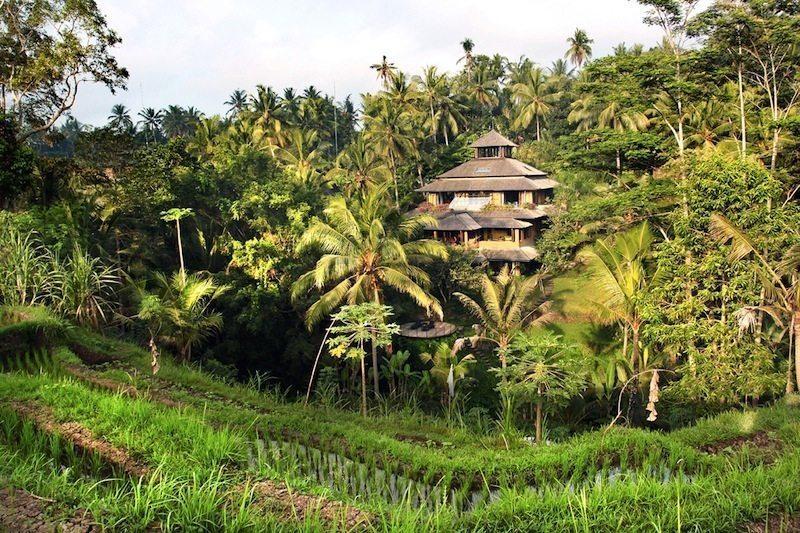 Pelangi Estate Rice Field I Ubud, Bali