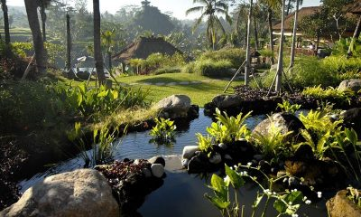 Villa Bayad Pool Side   Ubud, Bali
