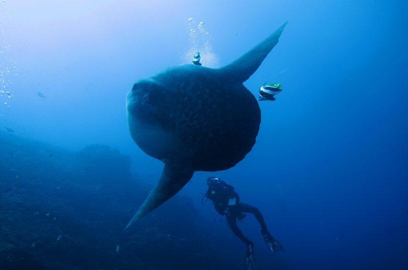Padang Bai Diving