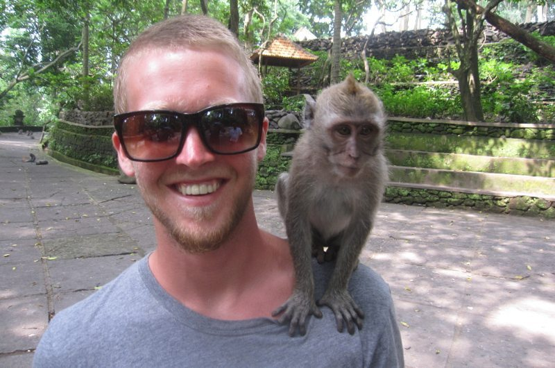 bali-macaque-monkey
