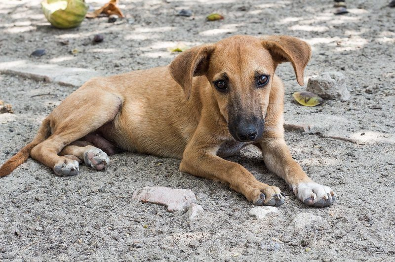 Stray Dog Safety Tips Bali