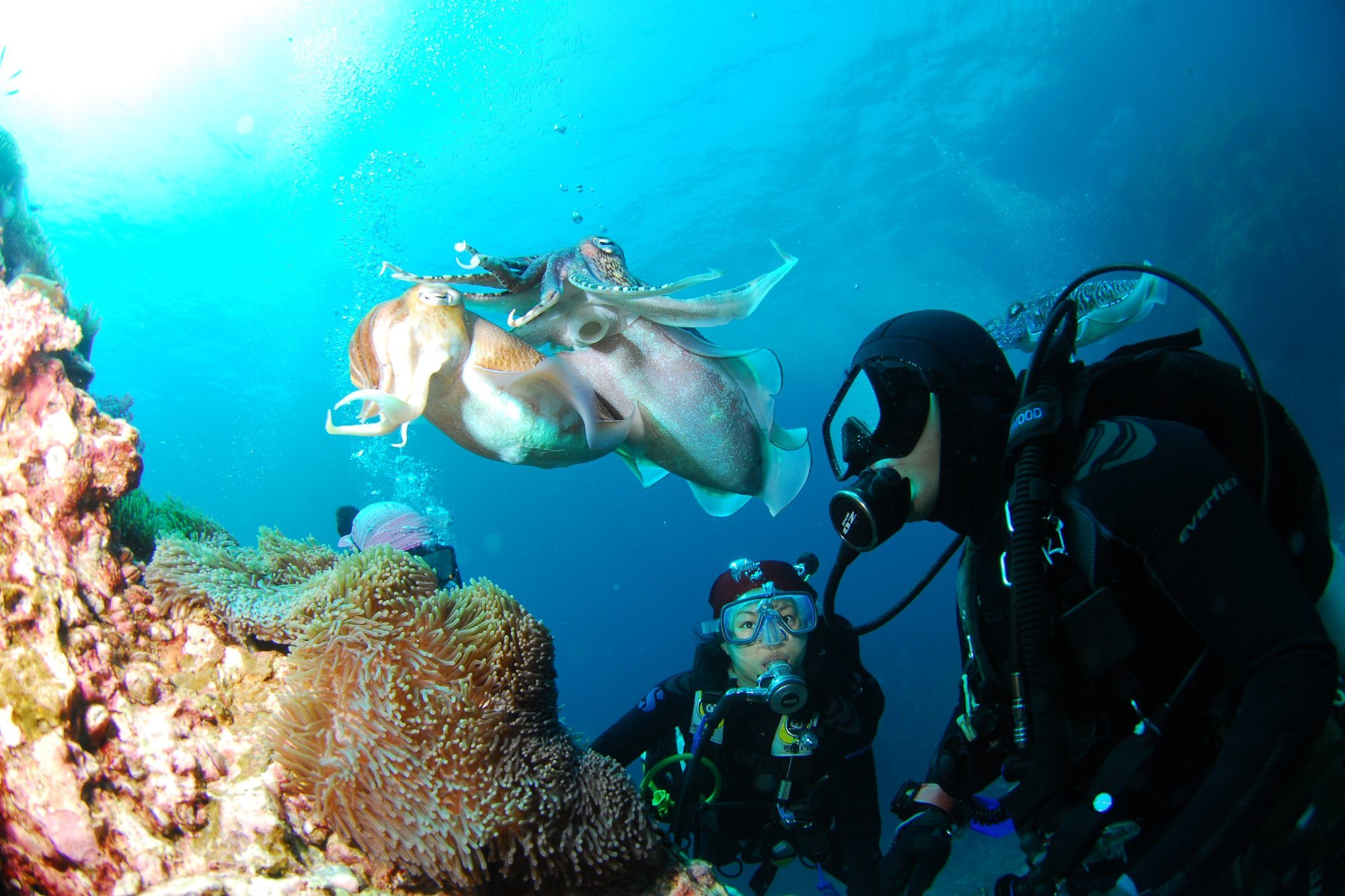 Complete Guide to Scuba Diving in Phuket