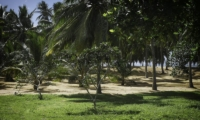Ranawara Gardens | Tangalle, Sri Lanka