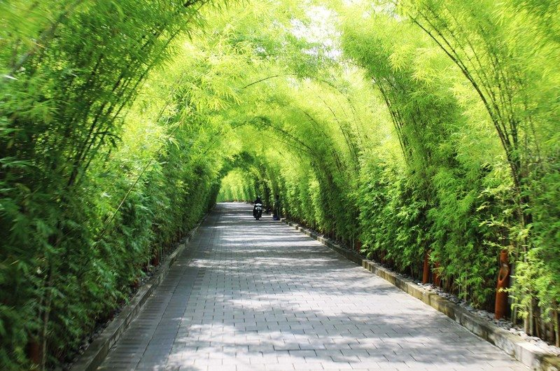 Looking for things to do in Seminyak on a budget? Discovering this hidden bamboo pathway is just one option - check out this article for seven free things to do in Seminyak, Bali!