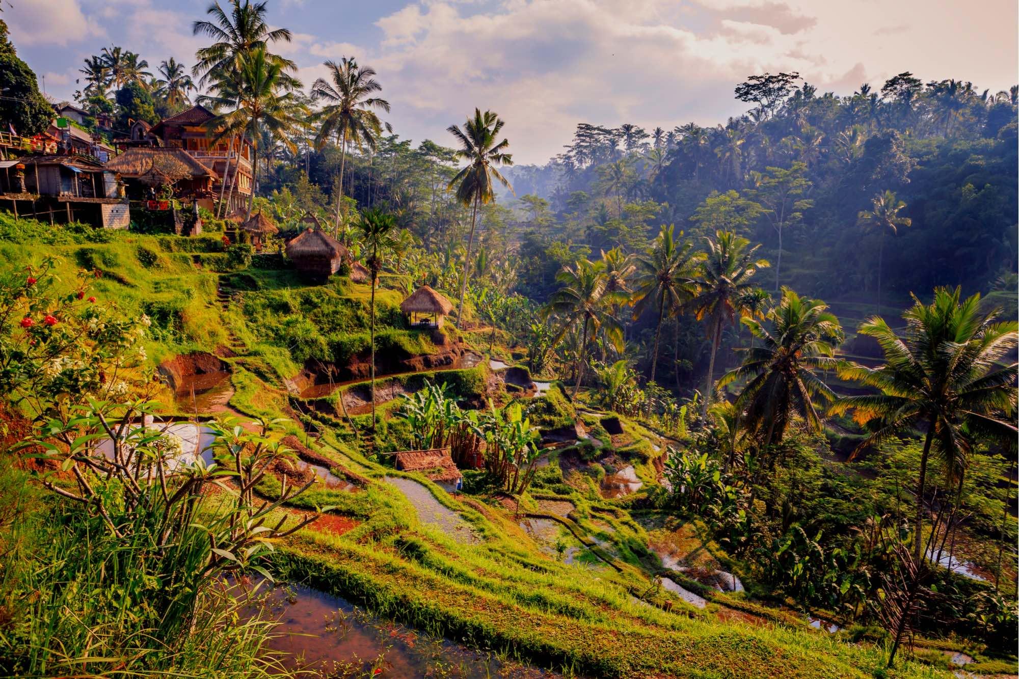 A Day Trip to Ubud