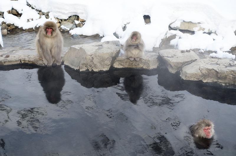 Japan Nagano Snow Monkey Onsen