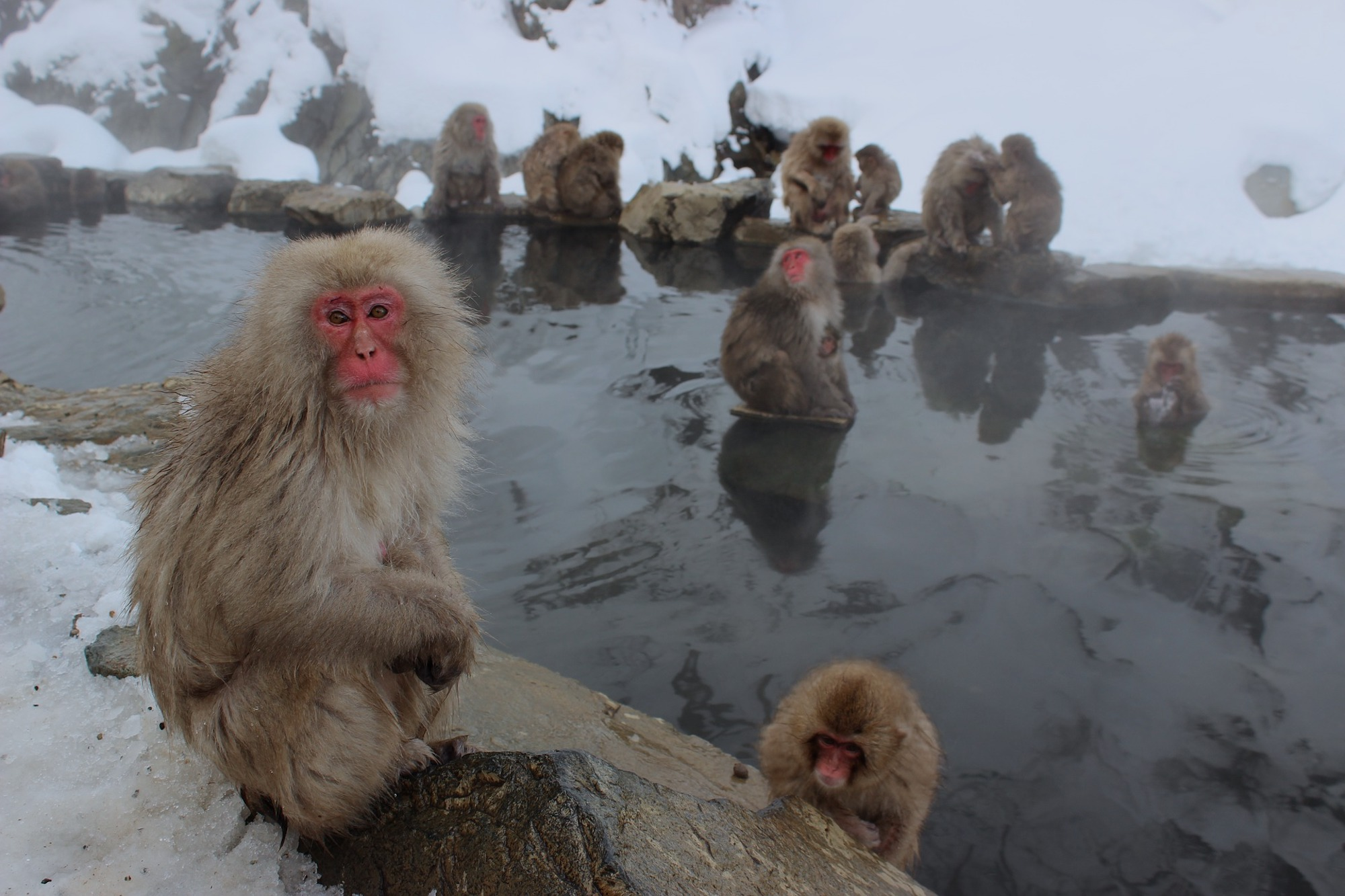 Visiting the Snow Monkeys in Japan