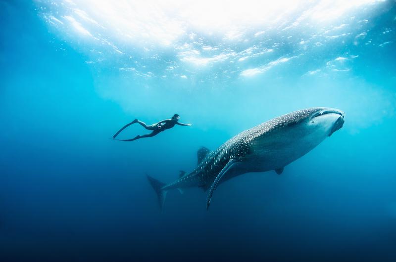 Maldives Soneva Fushi Diving