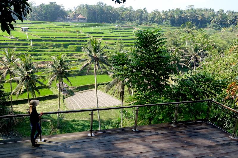 Bali Ubud Permata Ayung Rice Paddies