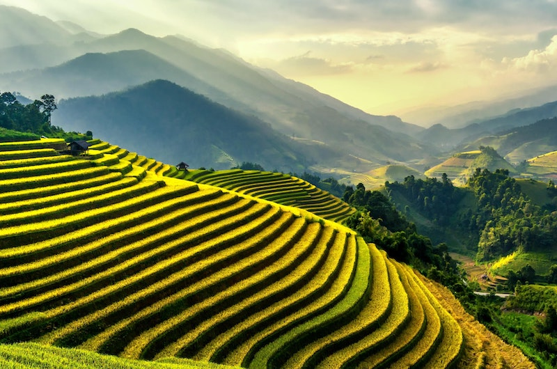 Sapa Rice Fields | Sapa, Vietnam