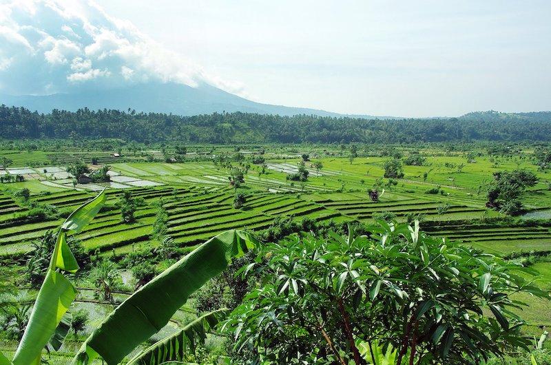 Gianyar Bali Rice Fields