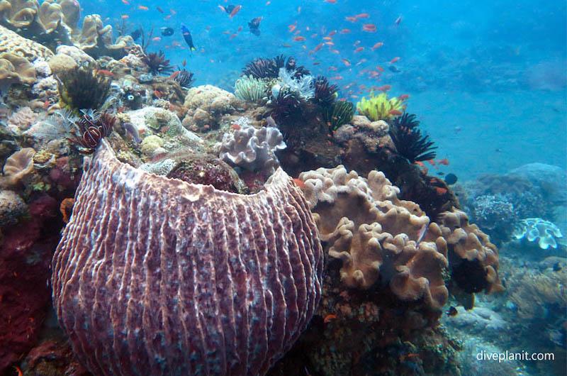 Diving Gili Selang | Indonesia